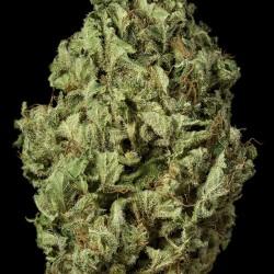 Sour Diesel Auto Cannabis Seeds