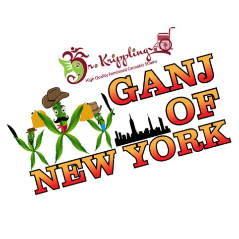 Ganj of New York Dr Krippling