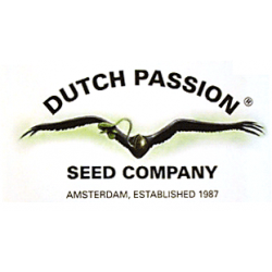 Dutch Passion - Cannabis Seeds