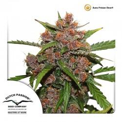 Auto Frisian Dew Cannabis Seeds