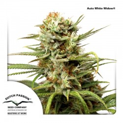 Auto White Widow Dutch Passion