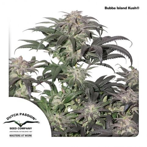 Bubba Island Kush Cannabis Seeds