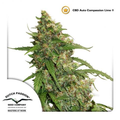 CBD Auto Compassion Lime - Cannabis Seeds