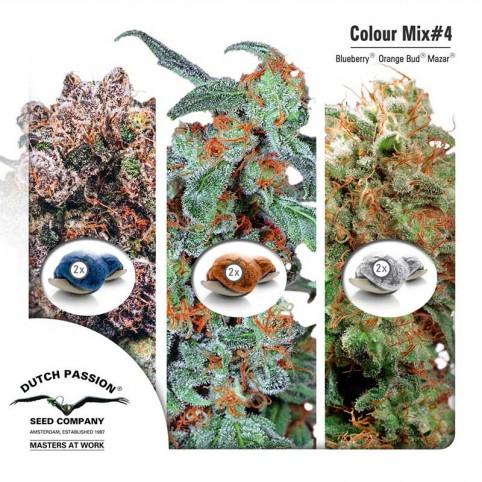 Colour Mix #4 Dutch Passion