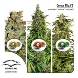 Colour Mix #6 Dutch Passion