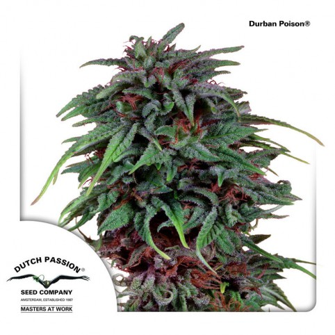 Durban Poison - Cannabis Seeds