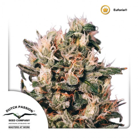 Euforia Cannabis Seeds