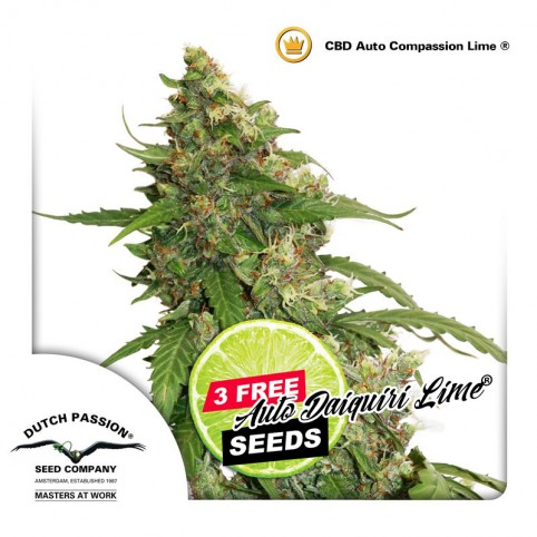 CBD Auto Compassion Lime - Cannabis Seeds