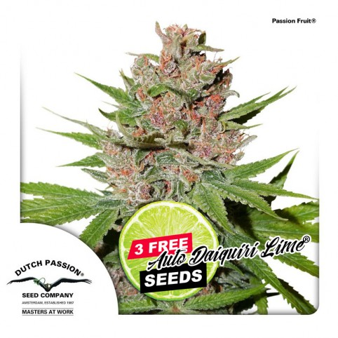 Passion Fruit - Cannabis Seeds