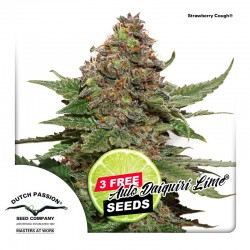 Strawberry Cough - Cannabis Seeds