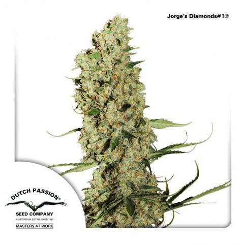 Jorge's Diamonds #1 Cannabis Seeds