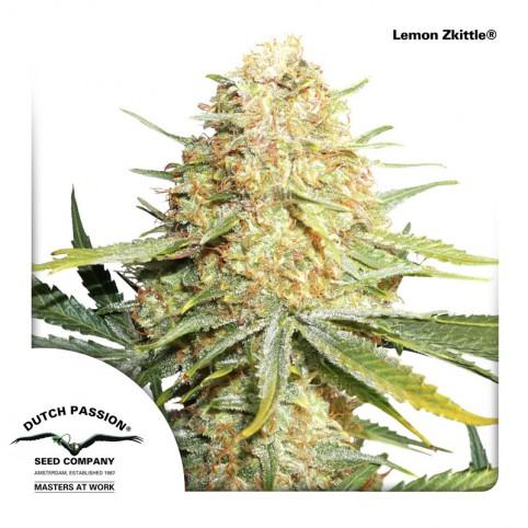 Lemon Zkittle - Cannabis Seeds