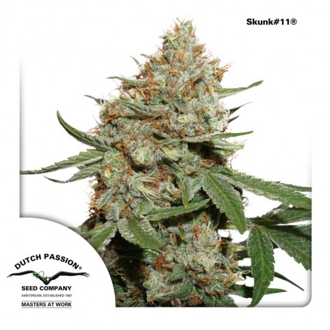 Skunk #11 Cannabis Seeds