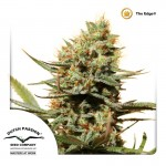 The Edge Cannabis Seeds