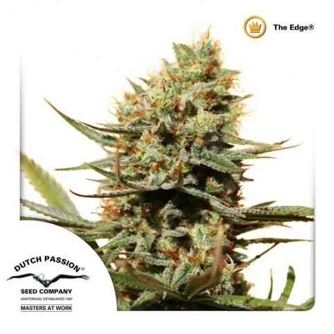 The Edge Cannabis Seeds