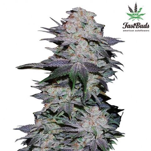 Blackberry Cannabis Seeds