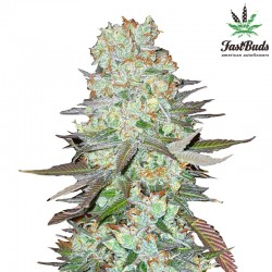 G14 Cannabis Seeds