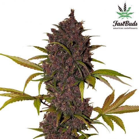 LSD-25 Cannabis Seeds