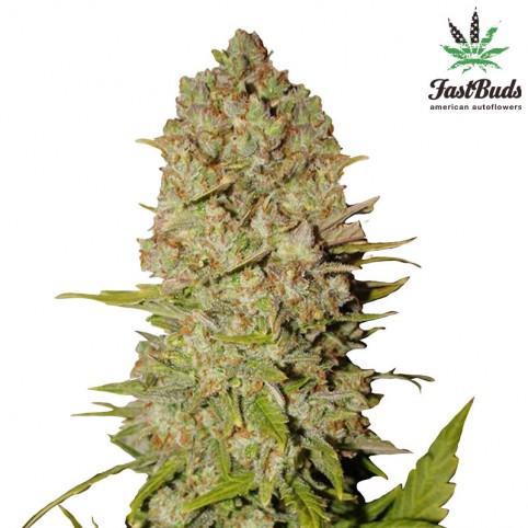 Pineapple Express Cannabis Seeds