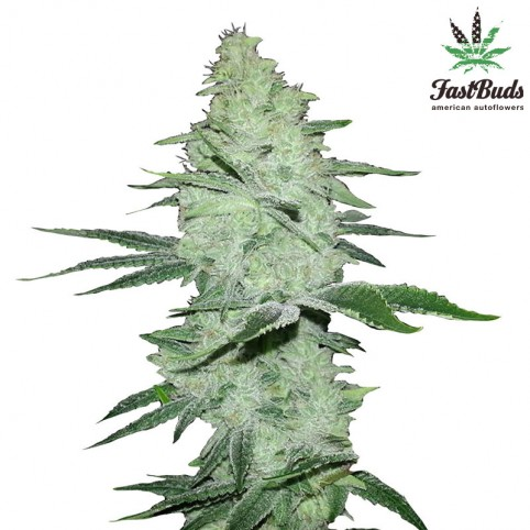 Six Shooter Cannabis Seeds