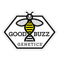 Good Buzz Genetics - Bulk Cannabis Seeds