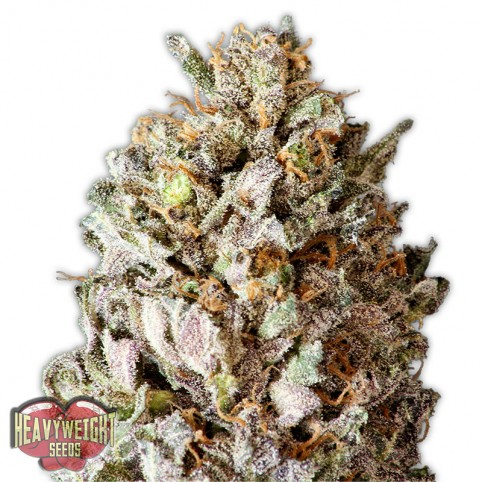 Diesel Drift - Cannabis Seeds