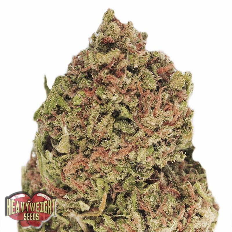 cannabis machine