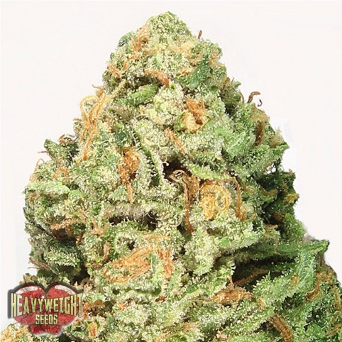 Fruit Punch Cannabis Seeds