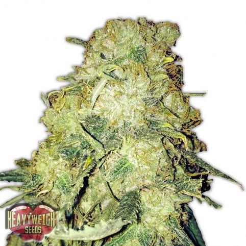 Gold Mine Cannabis Seeds