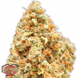 Monster Profit - Cannabis Seeds