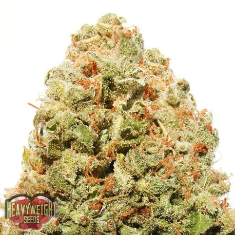 Strawberry Cake Cannabis Seeds