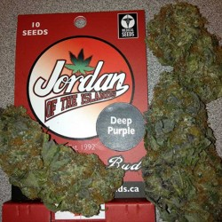 Deep Purple Cannabis Seeds