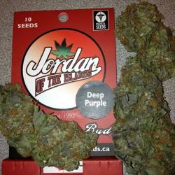 Deep Purple Cannabis Seeds