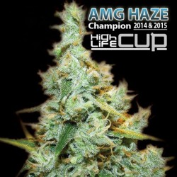 Amnesia Mac Ganja - Cannabis Seeds