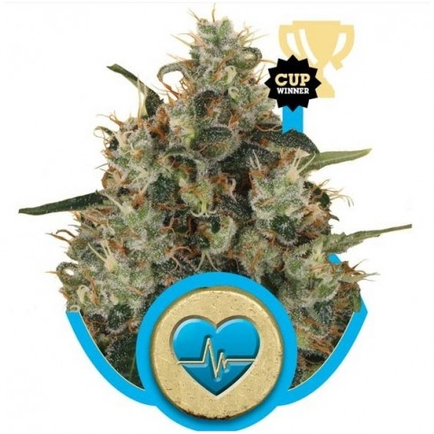 Medical Mass - CBD Marijuana Seeds