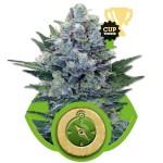 Northern Light Auto Cannabis Seeds