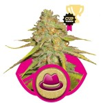 OG Kush Cannabis Seeds