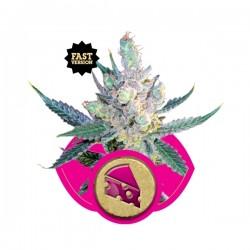 Royal Cheese Fast V Cannabis Seeds