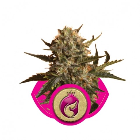 Royal Madre Cannabis Seeds