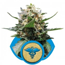 Royal Medic Cannabis Seeds