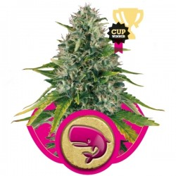 Royal Moby Cannabis Seeds