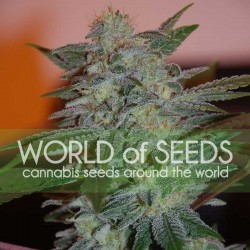 Yumbolt 47 Cannabis Seeds