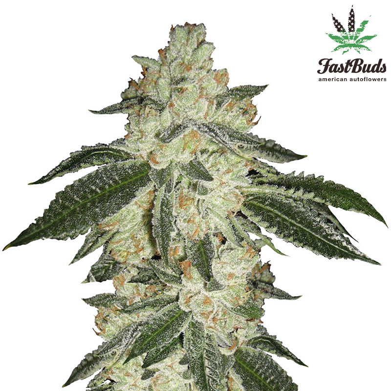 Green Crack - Fast Buds